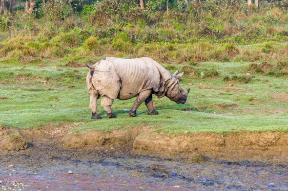 To Stop Wildlife Crime, Conservationists Ask Why People Poach
